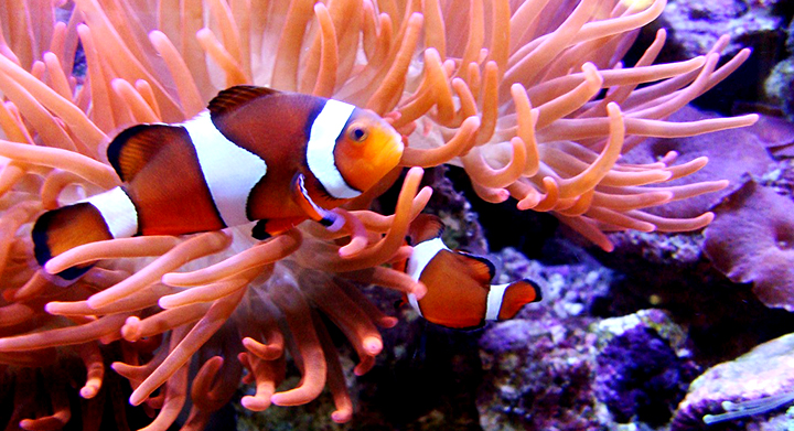 Image gallery large saltwater fish exotic for Fish store miami